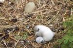 15 doda svanungar