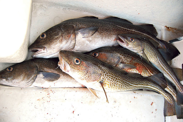 07 Torskfiske