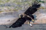 11 eagle-3741968_1920